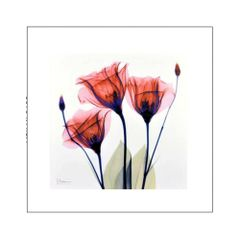 quadro-decorativo-flores-delicadas