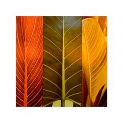 quadro-decorativo-folhas-coloridas