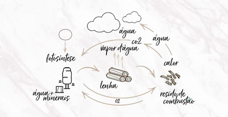 ciclo de energia e biomassa